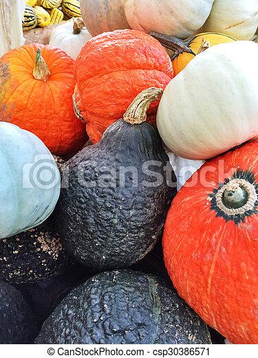 Colorful autumn squashes - csp30386571