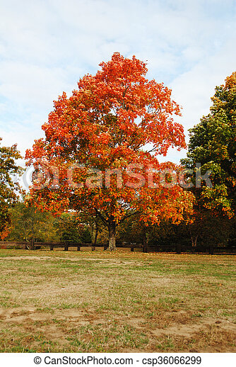 Colorful Autumn Tree in a Park - csp36066299