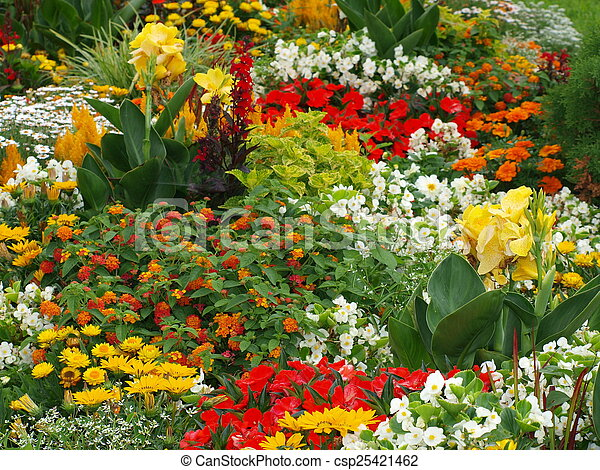 colorful bed of flowers - csp25421462