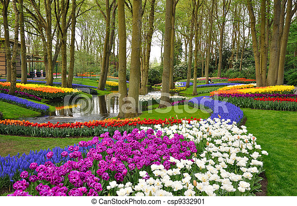 Colorful blooming tulips in Keukenhof park in Holland - csp9332901