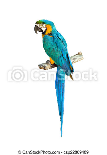 Colorful blue parrot macaw - csp22809489