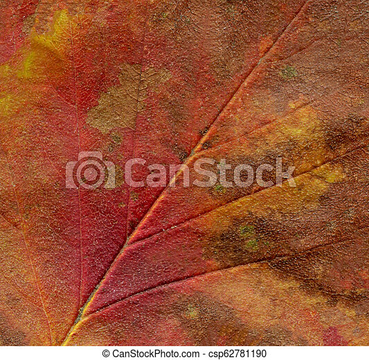 Colorful brown autumn leaf closeup. Autumn background with fall leaf - csp62781190