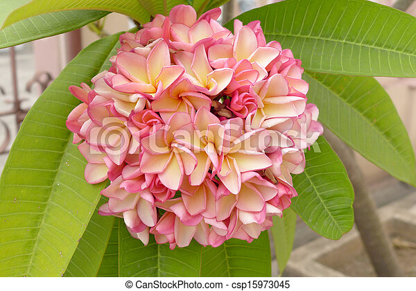 Colorful bunch of flowers - csp15973045