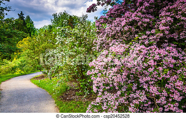 Colorful bushes and trees along a path at Cylburn Arboretum in B - csp20452528