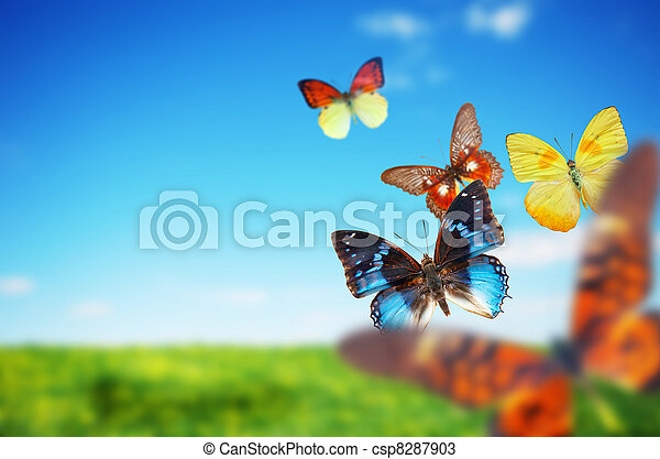 Colorful buttefly spring field - csp8287903