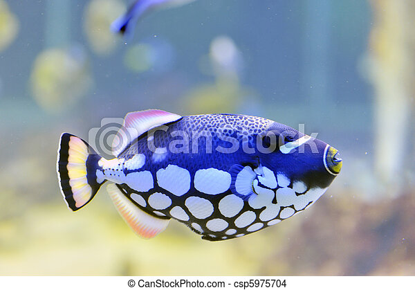 colorful butterfly-fish in a aquarium - csp5975704
