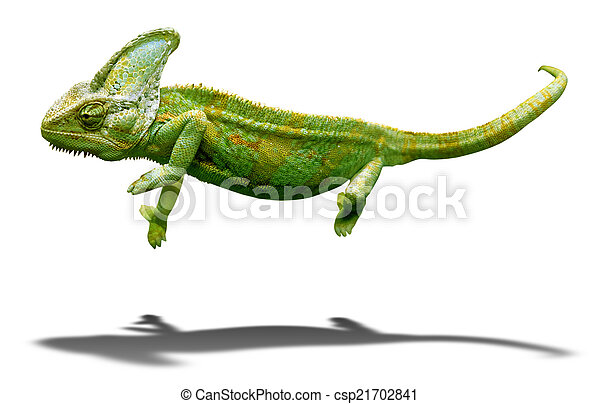 Colorful chameleon closeup isolated on white with shadow - csp21702841