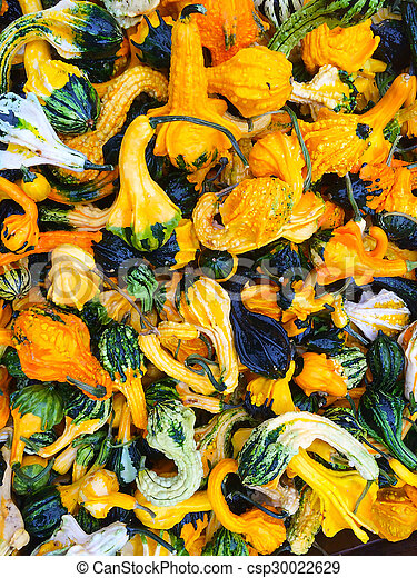 Colorful decorative gourds - csp30022629