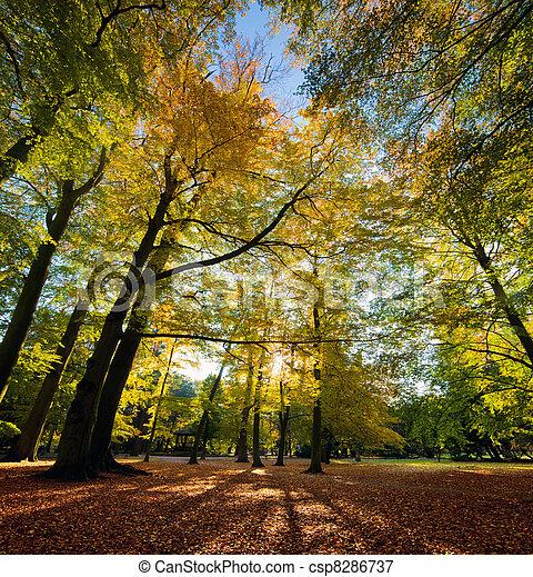 Colorful fall autumn park - csp8286737