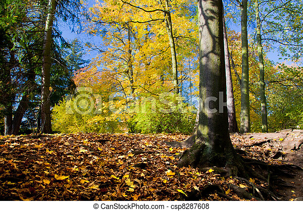 Colorful fall autumn park - csp8287608