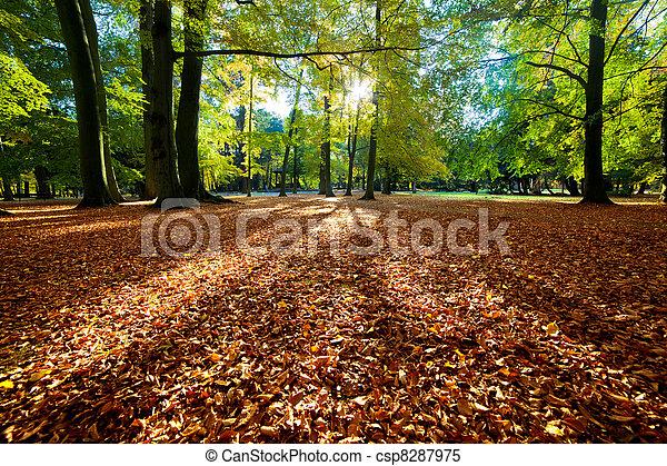 Colorful fall autumn park - csp8287975
