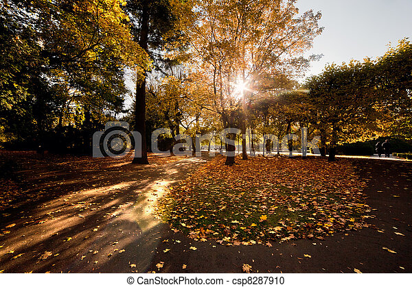Colorful fall autumn park - csp8287910