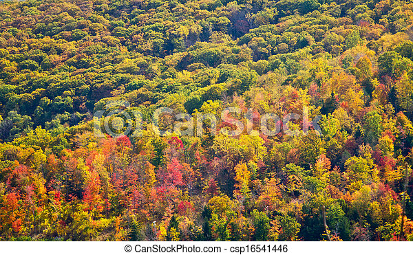 Colorful Fall Forest Trees Background Texture - csp16541446