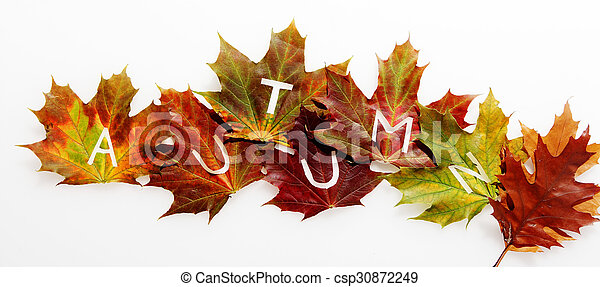 Colorful fall leaves in an Autumn concept - csp30872249