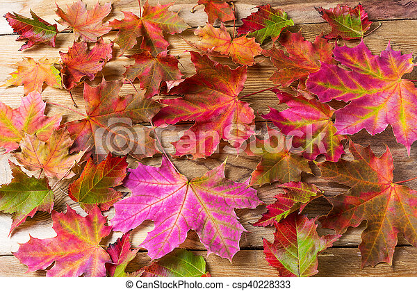 Colorful fall maple leaves background - csp40228333