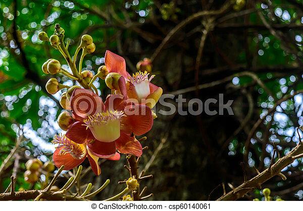 Colorful flower, selective focus - csp60140061