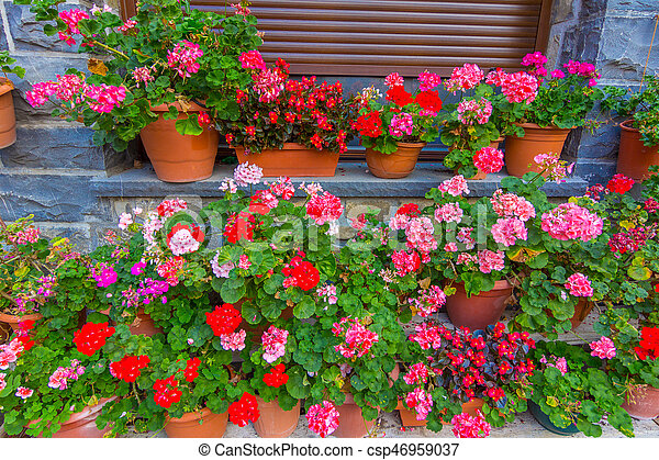 Colorful Flowers In Pots And Flower Pots