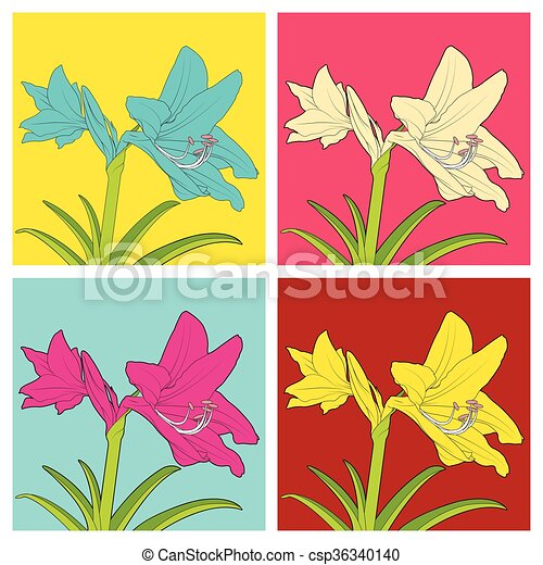 Colorful flowers of Hippeastrum. Vector illustration. - csp36340140