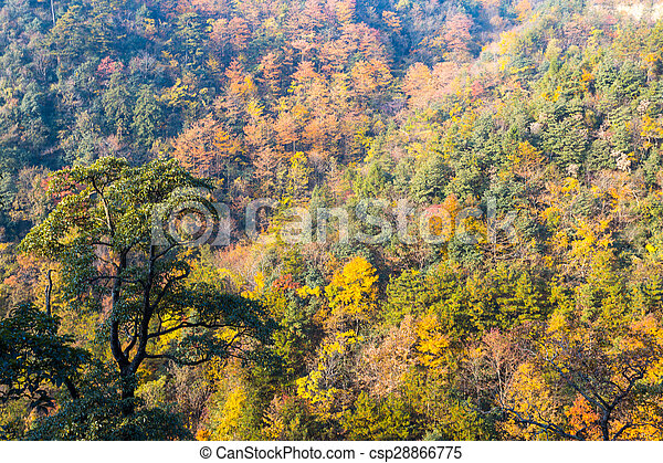Colorful foliage in the autumn - csp28866775
