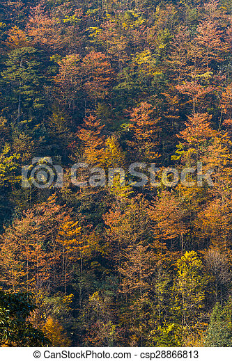 Colorful foliage in the autumn - csp28866813