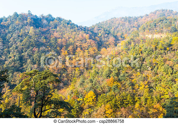 Colorful foliage in the autumn - csp28866758