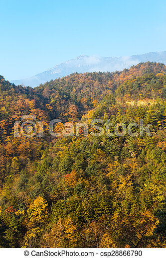 Colorful foliage in the autumn - csp28866790