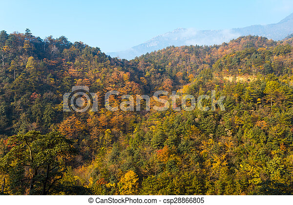 Colorful foliage in the autumn - csp28866805