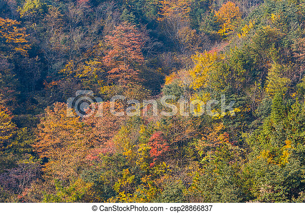Colorful foliage in the autumn - csp28866837