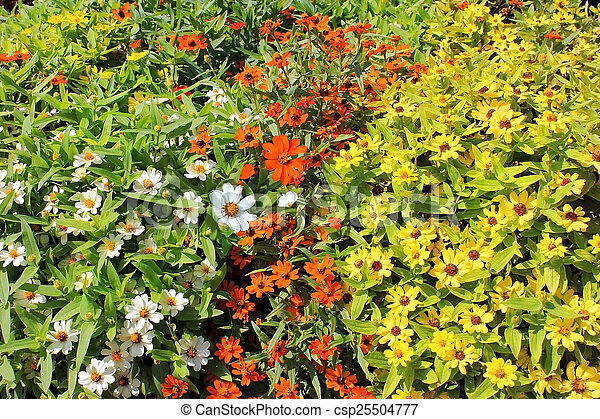colorful forest daisies - csp25504777