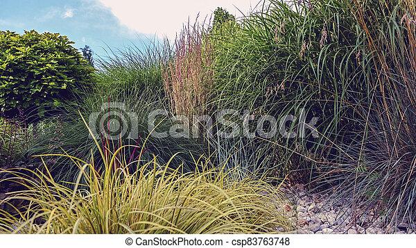 Colorful Garden Decorative Grasses - csp83763748