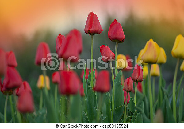 Colorful garden in spring. Beautiful garden in spring - csp83135524