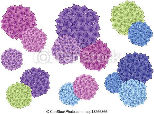 colorful hydrangea flowers, vector - csp13266366