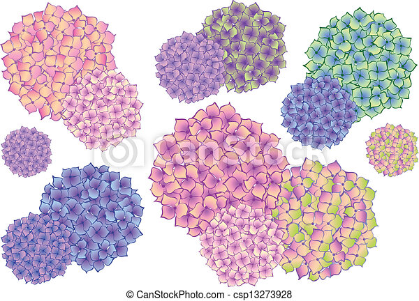 colorful hydrangea flowers, vector - csp13273928