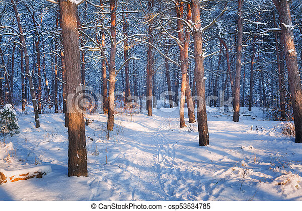 Colorful landscape with snowy trees and trail - csp53534785