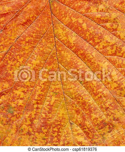 Colorful Leaf Texture Colorful Closeup Beautiful Fall Foliage Autumn Leaves Background
