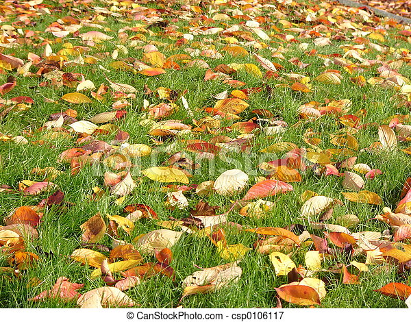Colorful leaves - csp0106117