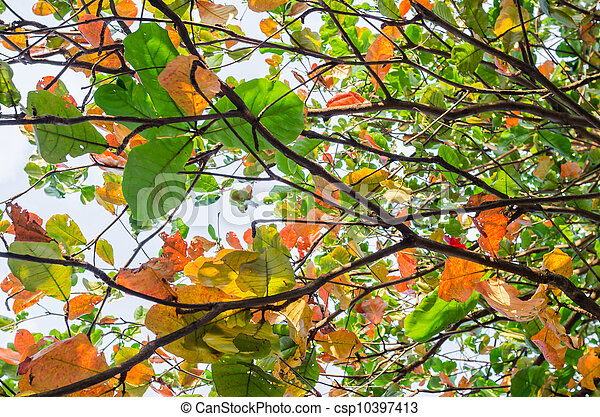 Colorful leaves - csp10397413