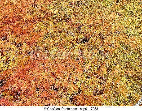 colorful leaves - csp0117358