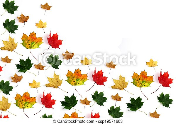 Colorful leaves - csp19571683
