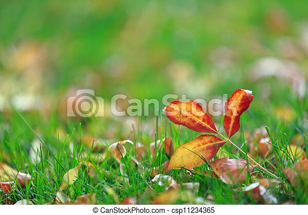 colorful leaves - csp11234365