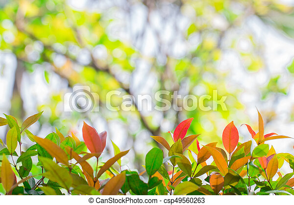 Colorful leaves. - csp49560263