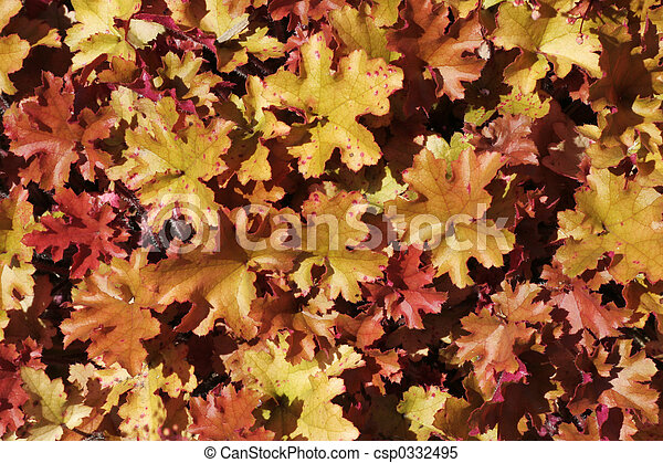colorful leaves - csp0332495