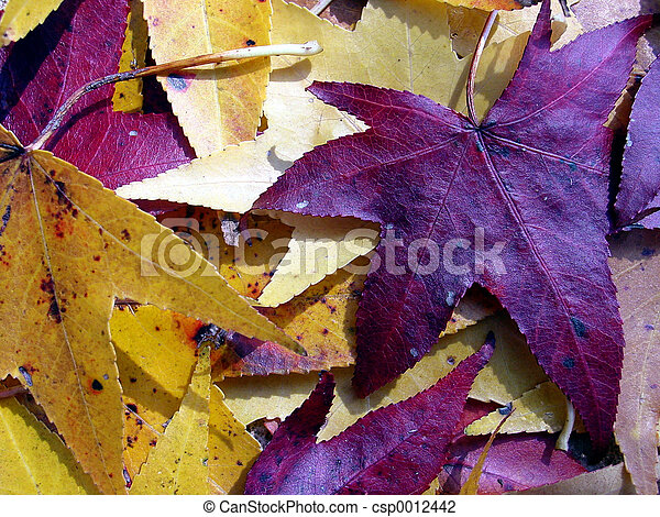 Colorful Leaves - csp0012442