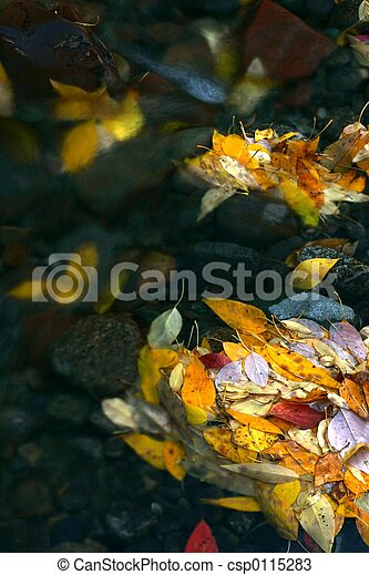 Colorful leaves - csp0115283