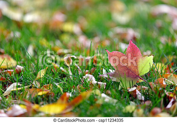 colorful leaves - csp11234335