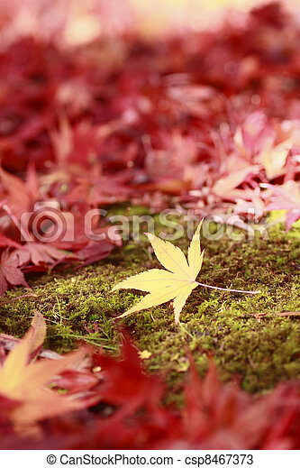 colorful leaves - csp8467373