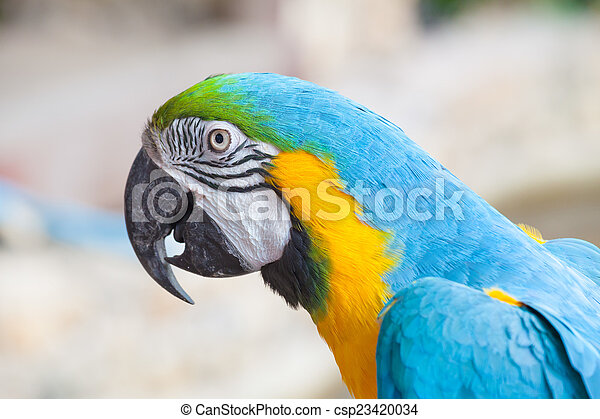 colorful macaw - csp23420034