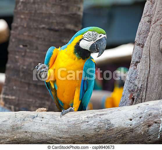 colorful macaw - csp9940673
