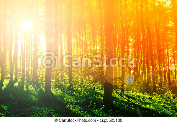 Colorful mystical forest with sun ray at morning - csp5525180