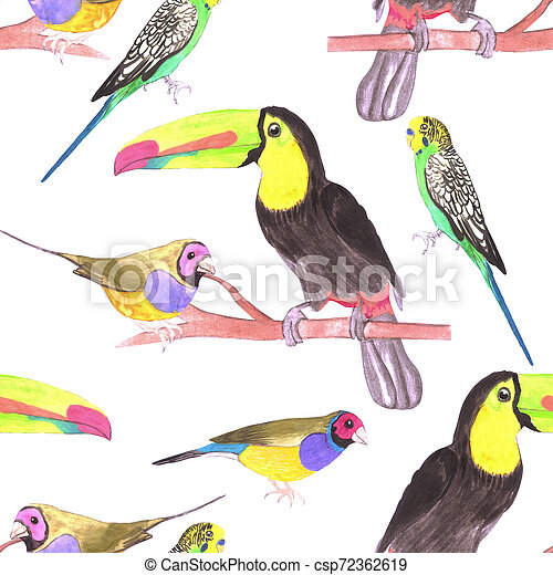 Colorful pet birds perched on a branch- watercolor seamless background - csp72362619